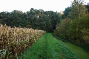 Twentepad langs maïsvelden