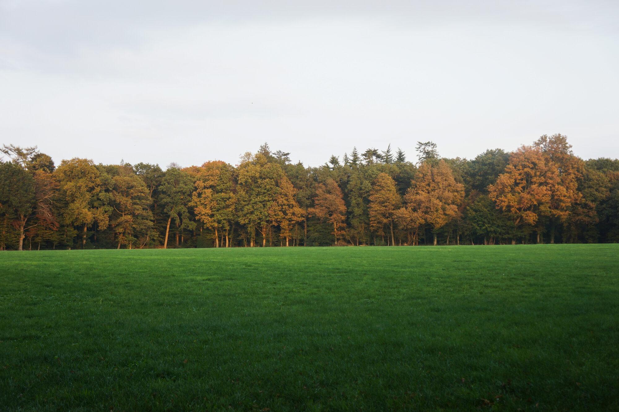 Bos in Singraven